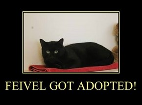 FEIVEL GOT ADOPTED!