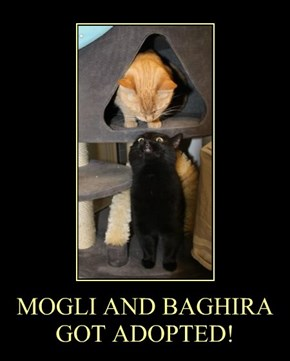 MOGLI AND BAGHIRA GOT ADOPTED!