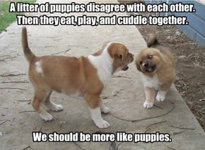 A litter of puppies disagree with each other. Then they eat, play, and cuddle together.