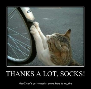 THANKS A LOT, SOCKS!