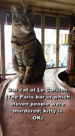 Bar cat at Le Carillon                                                 (The Paris bar in which eleven people were murdered; kitty is OK)                                                                                                .