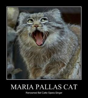 MARIA PALLAS CAT