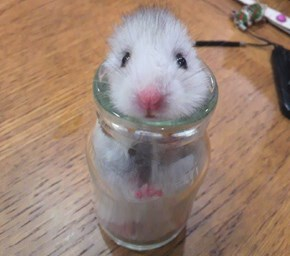 This Hamster Literally Bottled Up His Feelings During an Earthquake
