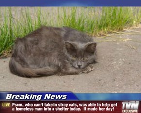 Breaking News - Psom, who can't take in stray cats, was able to help get a homeless man into a shelter today.  It made her day!