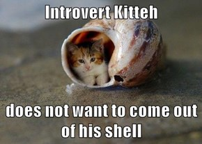 Introvert Kitteh  does not want to come out of his shell
