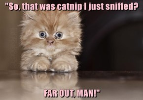 """""""So, that was catnip I just sniffed?  FAR OUT, MAN!"""""""