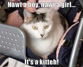 Nawt a boy, nawt a girl...  It's a kitteh!