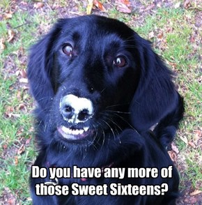 Do you have any more of those Sweet Sixteens?