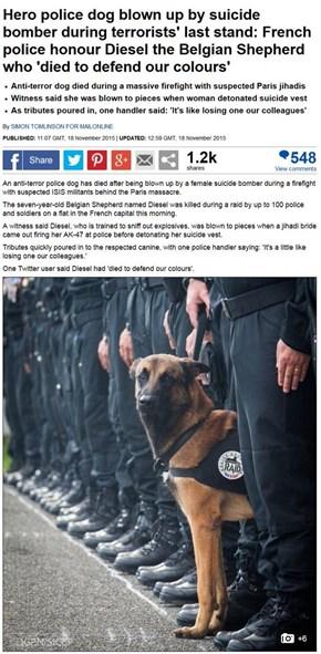 Hero police dog killed in raid on terrorists in France.