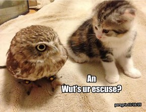 An Wut's ur escuse?