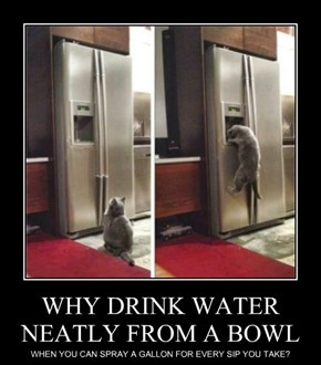 WHY DRINK WATER NEATLY FROM A BOWL