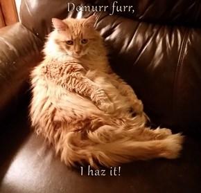 Demurr furr,  I haz it!