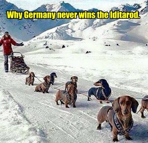 Why Germany never wins the Iditarod.