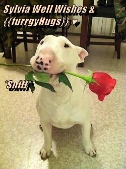 Sylvia Well Wishes & {{furrgyHugs}} ♥ *Sniff*
