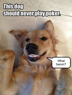 This dog should never play poker. What bacon?