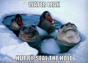 WATER LEAK  HURRY, SEAL THE HOLE