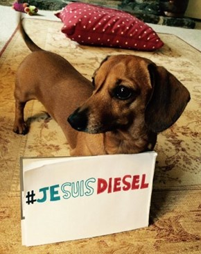 Dogs Everywhere Honor Diesel, the French Police Dog Killed in Paris Raid Against Terrorists