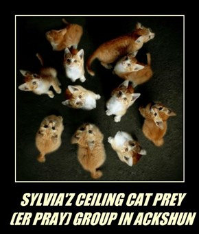 SYLVIA'Z CEILING CAT PREY  (ER PRAY) GROUP IN ACKSHUN