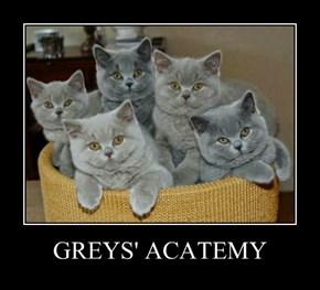 GREYS' ACATEMY