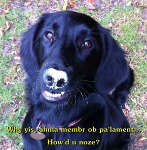 Why yis, ahma membr ob pa'lament... How'd u noze?