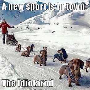 A new sport is in town:  The Idiotarod