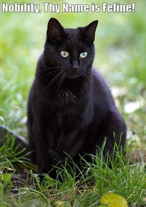 Nobility, Thy Name is Feline!