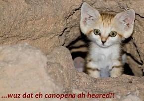 ...wuz dat eh canopena ah heared?!