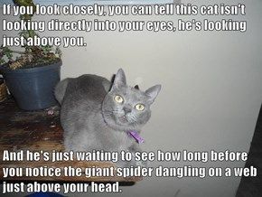 If you look closely, you can tell this cat isn't looking directly into your eyes, he's looking just above you.  And he's just waiting to see how long before you notice the giant spider dangling on a web just above your head.