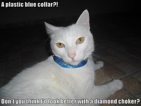 A plastic blue collar?!  Don't you think I'd look better with a diamond choker?
