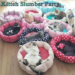 Kitteh Slumber Party