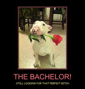 THE BACHELOR!