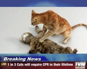 Breaking News - 1 in 3 Cats will require CPR in their lifetime