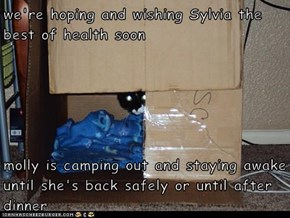 we're hoping and wishing Sylvia the best of health soon  molly is camping out and staying awake until she's back safely or until after dinner
