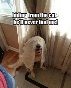 hiding from the cat - he'll never find me!
