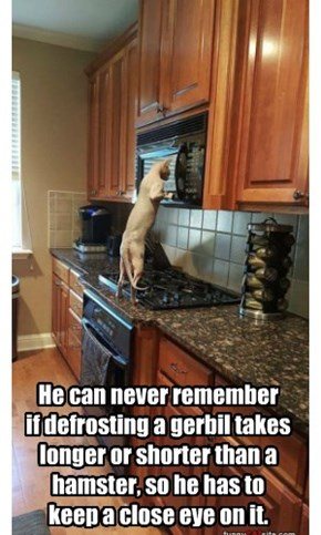 He can never remember  if defrosting a gerbil takes longer or shorter than a hamster, so he has to  keep a close eye on it.
