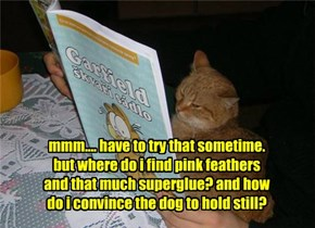 You'll Figure It Out, Kitteh!