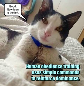 Human obedience training.