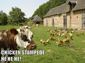 CHICKEN STAMPEDE                                    HE HE HE!