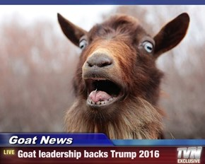 Goat News - Goat leadership backs Trump 2016