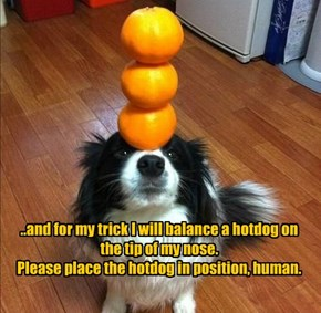 ..and for my trick I will balance a hotdog on the tip of my nose. Please place the hotdog in position, human.