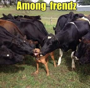 Among  frendz
