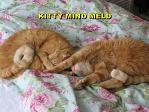 KITTY MIND MELD