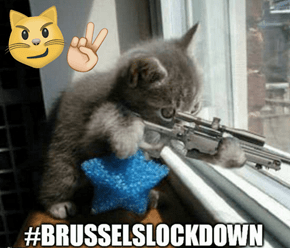 Only The Internet Has the Power to Turn the Lockdown in Belgium into a Time to Tweet Cat Pictures