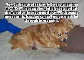 Susie's 2015 Thanksgibing.