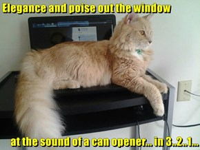 Elegance and poise out the window  at the sound of a can opener... in 3..2..1...