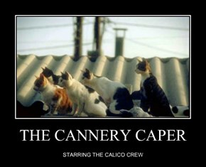 THE CANNERY CAPER