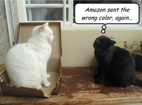 Why basement cat never shops online.