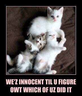 WE'Z INNOCENT TIL U FIGURE OWT WHICH OF UZ DID IT