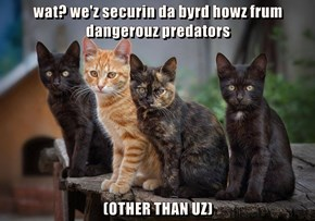 wat? we'z securin da byrd howz frum dangerouz predators   (OTHER THAN UZ)