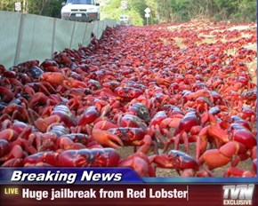 Crowd at the scene spotted with lobster cooking pots